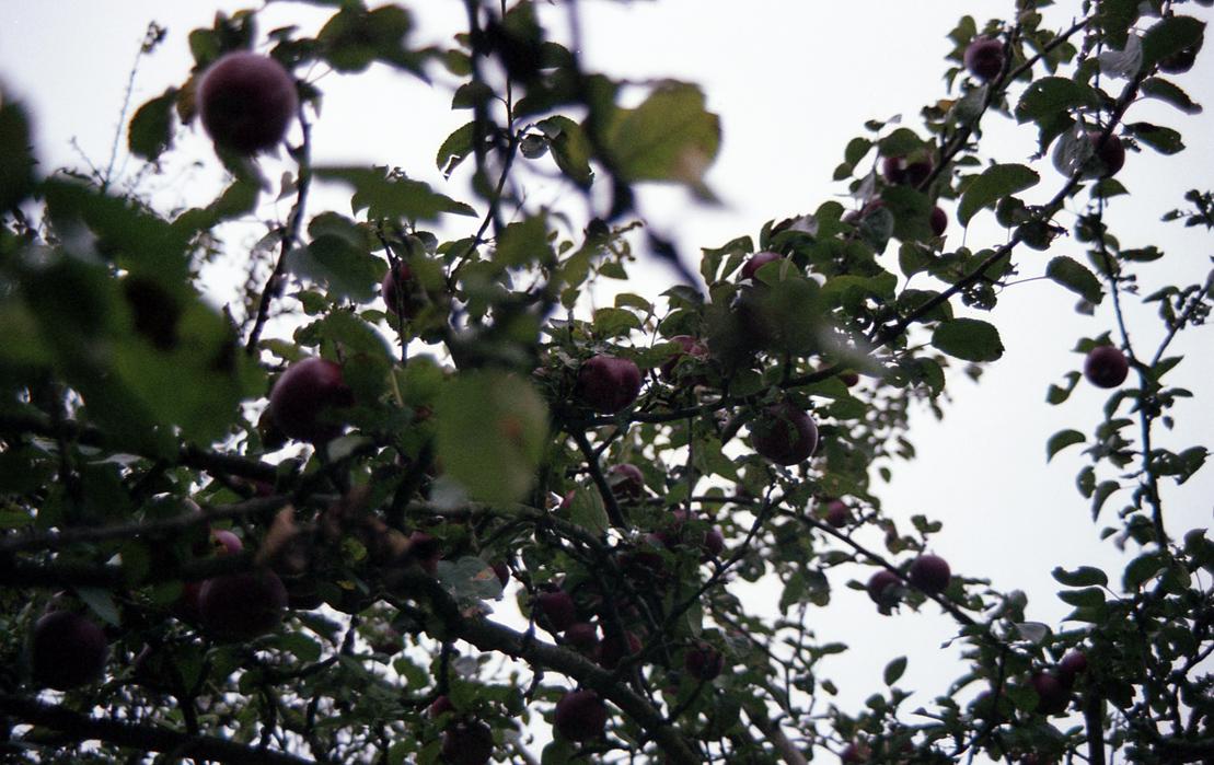 Apfelbäckchen (c) Lomoherz (2)
