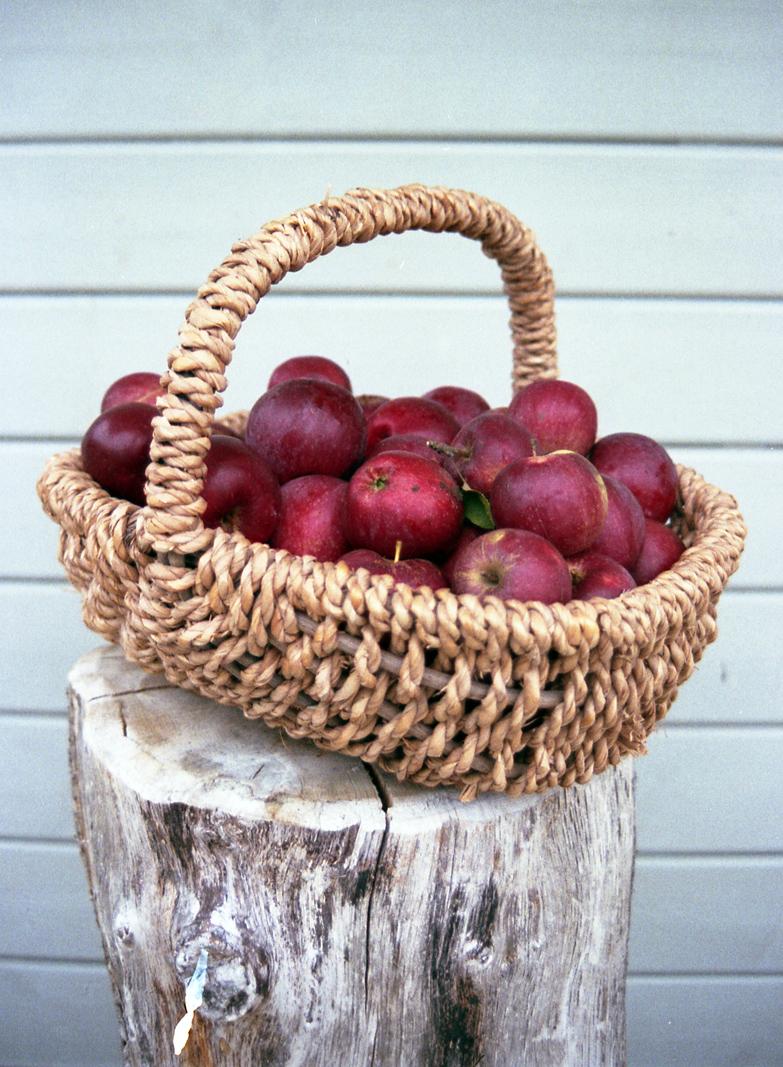Apfelbäckchen (c) Lomoherz (3)