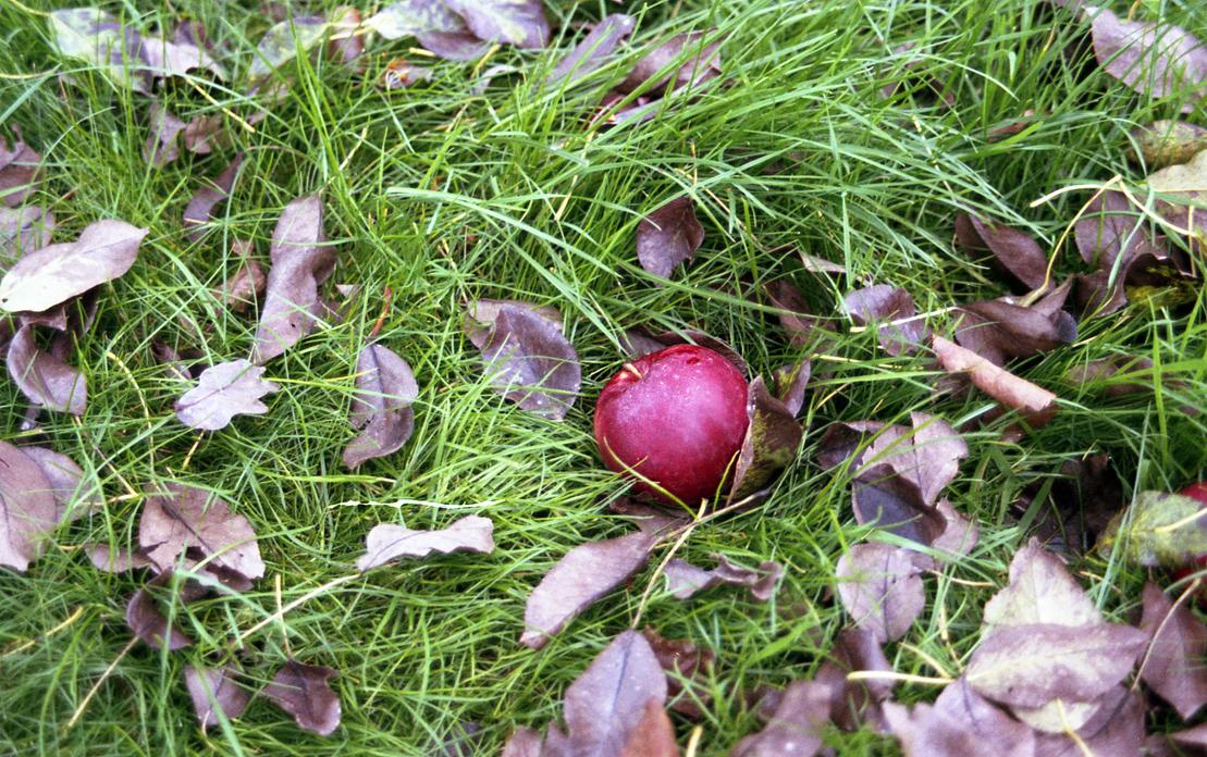 Apfelbäckchen (c) Lomoherz (4)