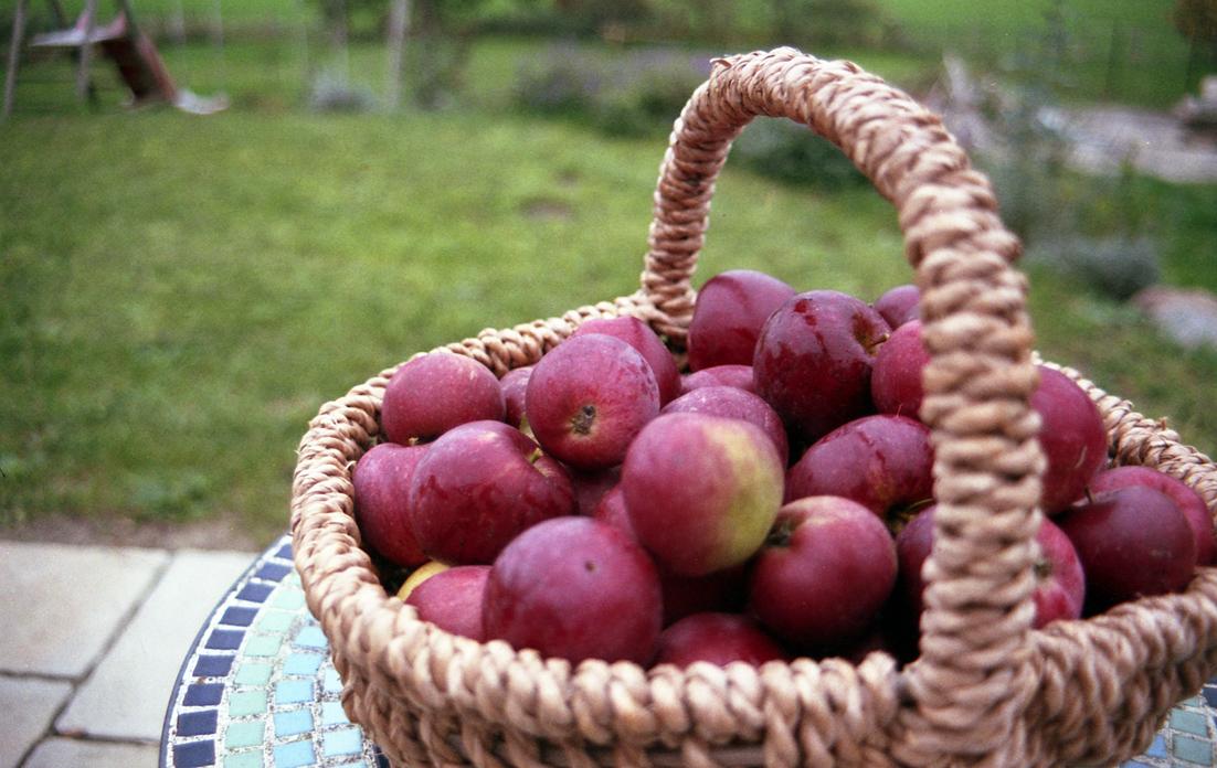 Apfelbäckchen (c) Lomoherz (7)